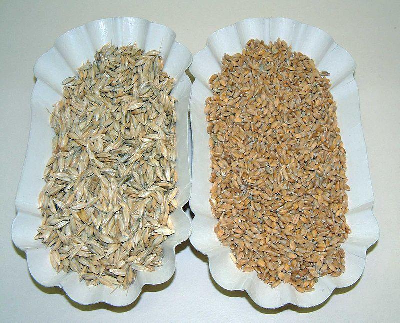 Grani antichi - www.alimentazione-su-misura.com