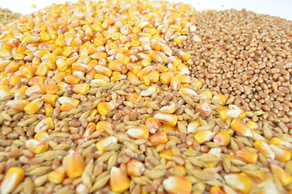 Grano mais riso glutine - www.alimentazione-su-misura.com