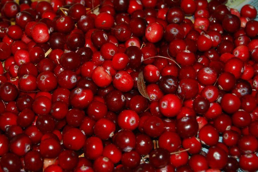 Cranberry, cistite - www.alimentazionesumisura.com